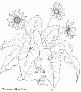 Seaweed and Human Health Balsam Root - balsamorhiza_sagittata