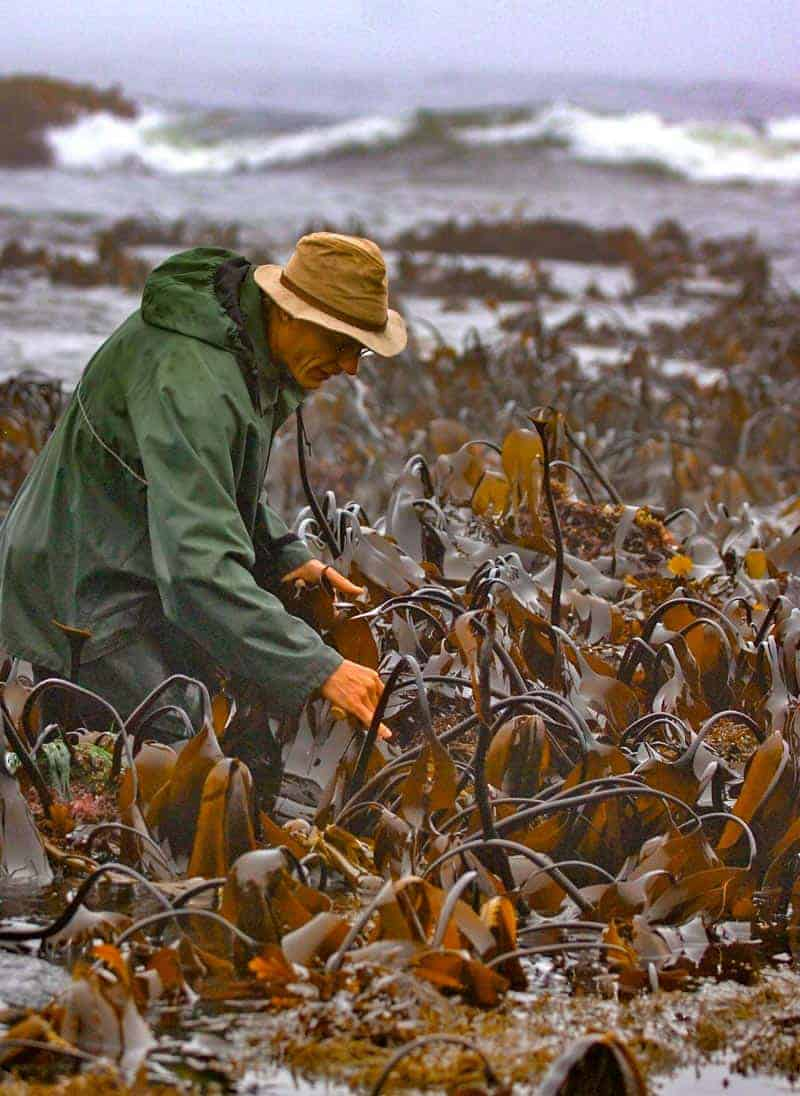 James Harvesting Kombu