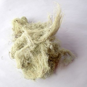 Usnea - Naturespirit Herbs